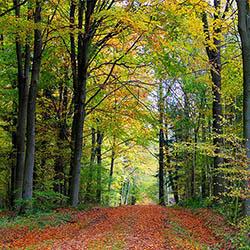 Forêt balada arbre