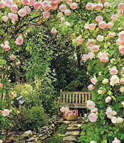Mini noce, jardin de rose