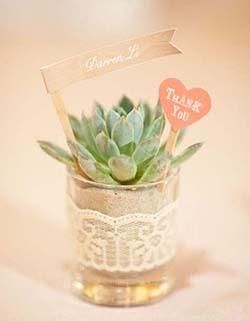 mini cactus cadeaux invités